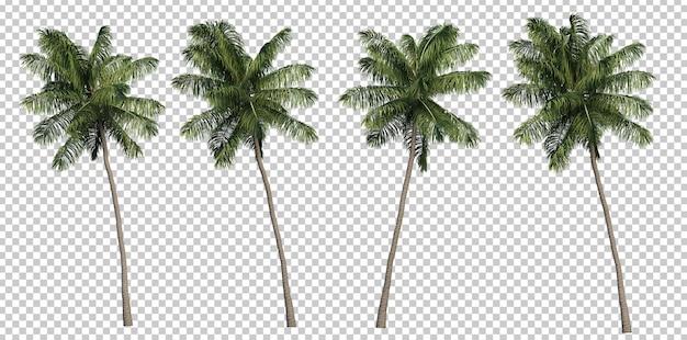 3d-rendering von kokospalmen