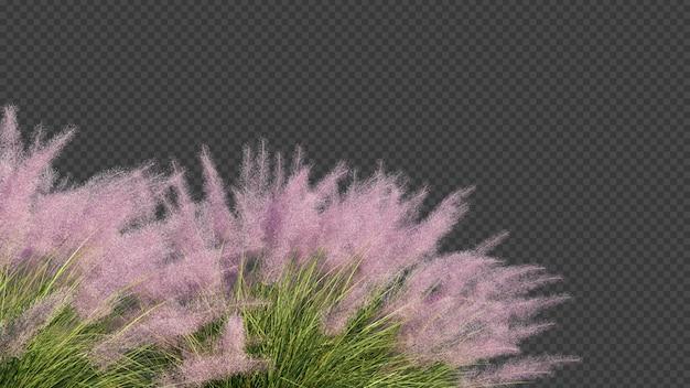 3d-rendering von pink flamingo muhly grass vordergrund