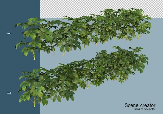 3d-rendering von schönen sträuchern in verschiedenen winkeln isoliert