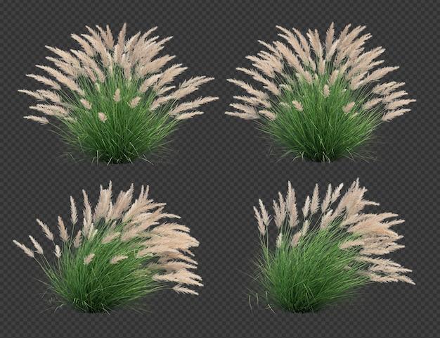 3d-rendering von silver spike grass