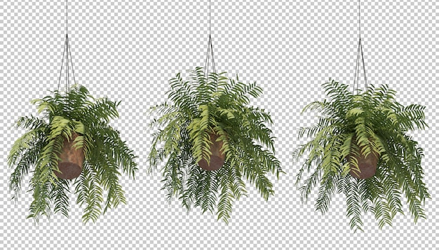 3d-wiedergabe des farns in hängenden topfpflanzen