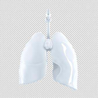 Anatomische darstellung der menschlichen lunge