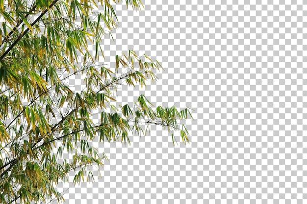 Bambusblätter und zweigvordergrund isoliert