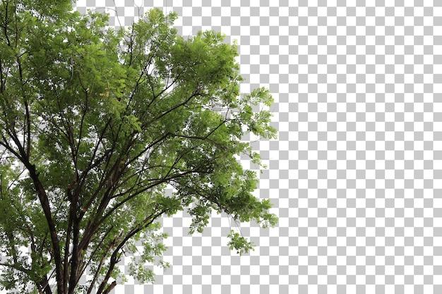 Baum im vordergrund