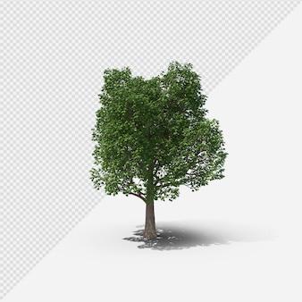 Baum isolierte darstellung mit schatten erster form