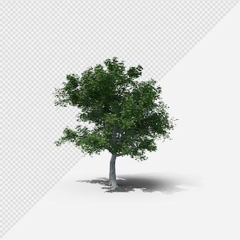 Baum isolierte darstellung mit schatten vierter form