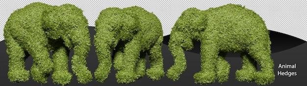 Beschneidungspfad für gartenhecken in elefantenform