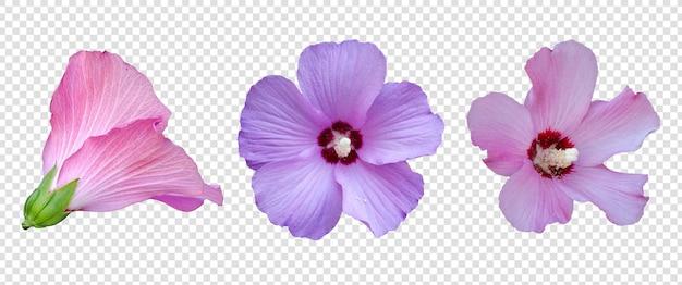 Blumenobjekt mit transparentem hintergrund psd