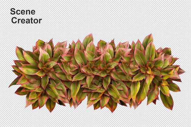 Draufsicht-blumenpflanzenkorb im 3d-rendering