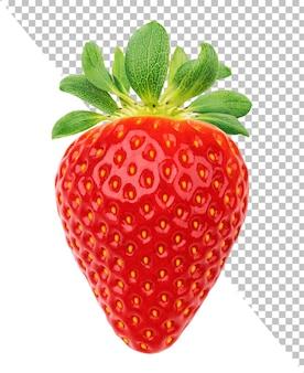 Eine erdbeere isoliert