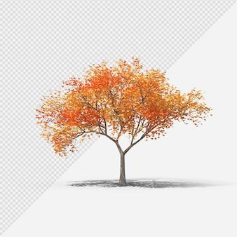 Fallbaum isolierte darstellung mit schatten fünfter form