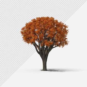 Fallbaum isolierte darstellung mit schatten vierter form
