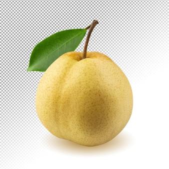 Frische chinesische birnenfrucht isoliert