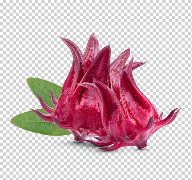 Frische rosellenfrüchte isoliert