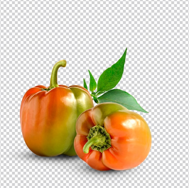 Frischer paprika isoliert