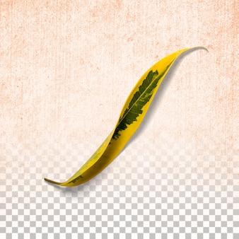 Frisches gelbes blatt isoliert auf transparent