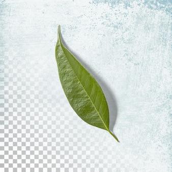 Frisches grünes blatt auf transparentem hintergrund isoliert