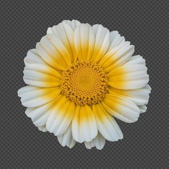Gelbe weiße kronengänseblümchenblume isolierte wiedergabe