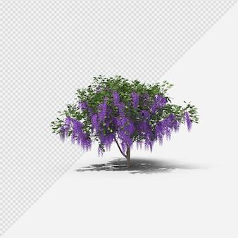 Glyzinienbaum isolierte darstellung mit schatten