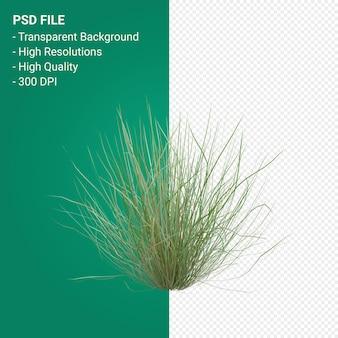 Grasbaum 3d-darstellung auf transparentem hintergrund isoliert