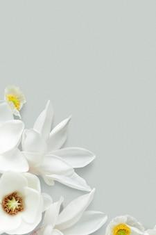 Hintergrund mit weißem magnolienmuster