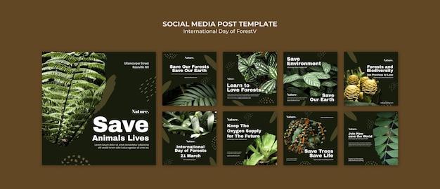 Internationaler tag der wälder social media post