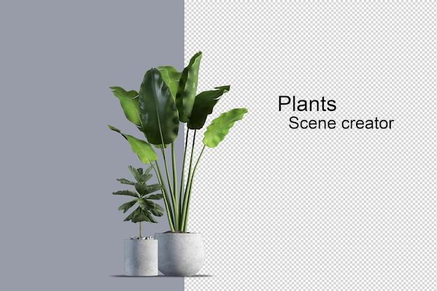 Isolierte frische pflanze auf holzkorb