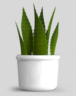 Isolierte pflanze im topf