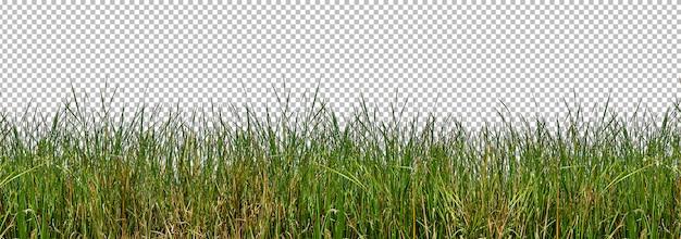 Isolierte wilde gräser