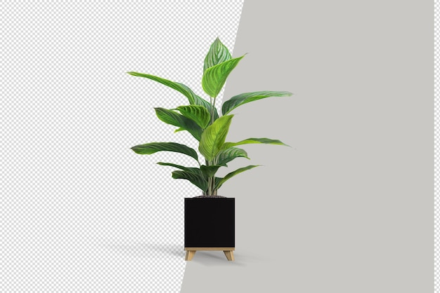 Isometrische 3d-rendering der pflanze