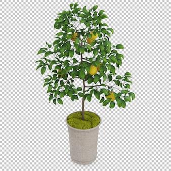 Isometrische pflanze