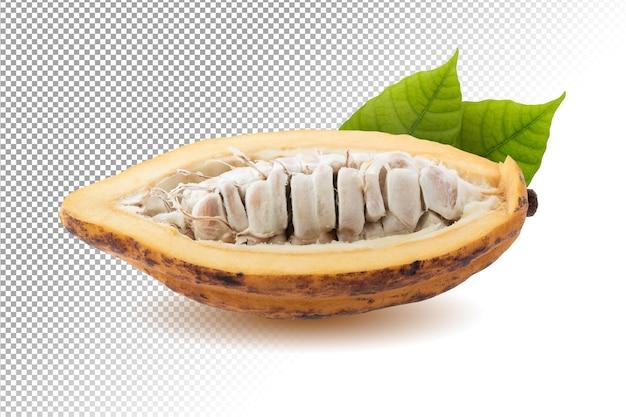 Kakaofrucht frische kakaofrüchte isoliert
