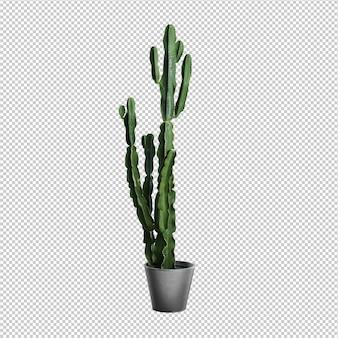 Kaktus über weißem hintergrund