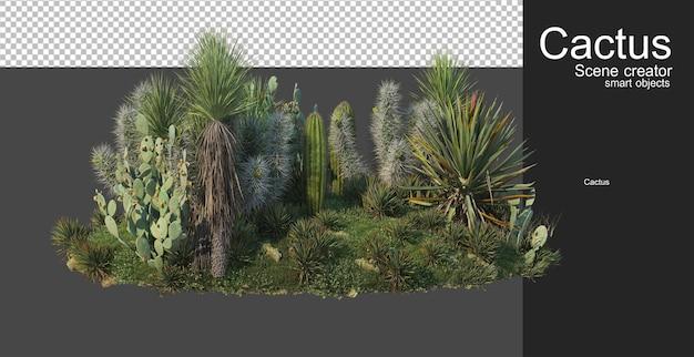 Kaktusgarten kleine sorte