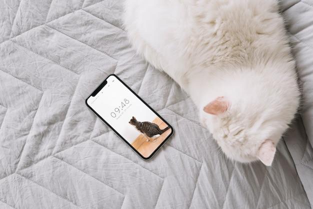 Katzen- und smartphone-modell auf der couch