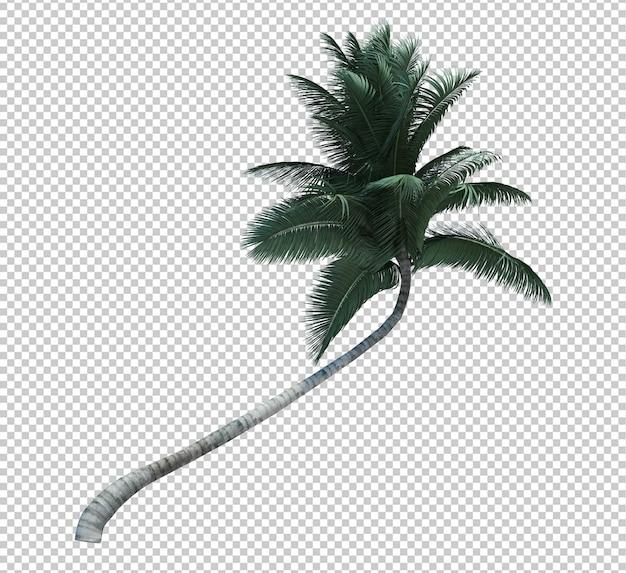 Kokosnussbaum des naturobjekts lokalisiertes weiß