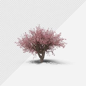Magnolienbaum isolierte darstellung mit schatten