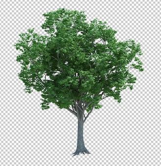 Naturobjektbaum isoliert