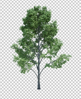 Naturobjektbaum lokalisiert auf weiß