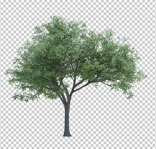 Naturobjektbaum lokalisiertes weiß