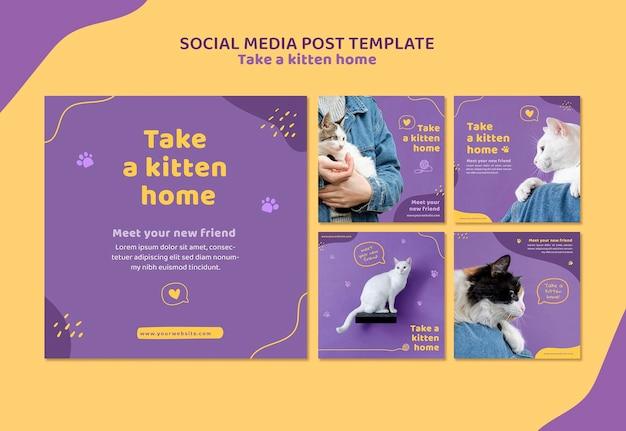 Nehmen sie eine kätzchen-social-media-post-vorlage an