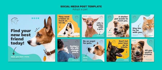 Nehmen sie einen haustier-social-media-beitrag an