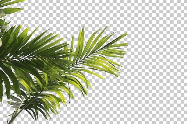 Palmenblätter im vordergrund isoliert