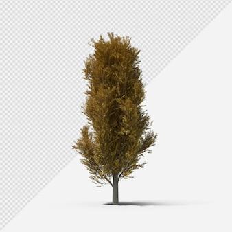 Pappelbaum isolierte darstellung mit schatten