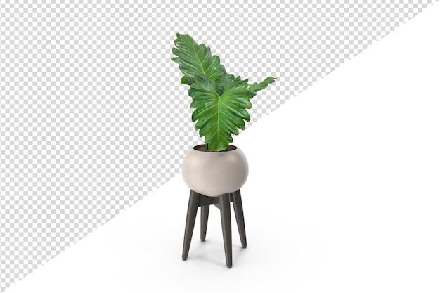 Pflanze isoliert