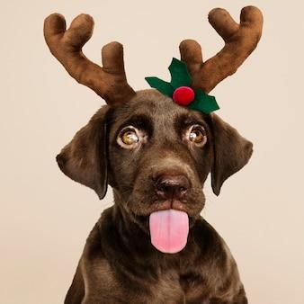 Porträt eines netten labrador retriever-welpen, der ein weihnachtsren-stirnband trägt