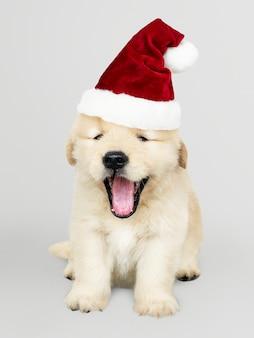 Porträt eines netten welpen des goldenen apportierhunds, der einen sankt-hut trägt