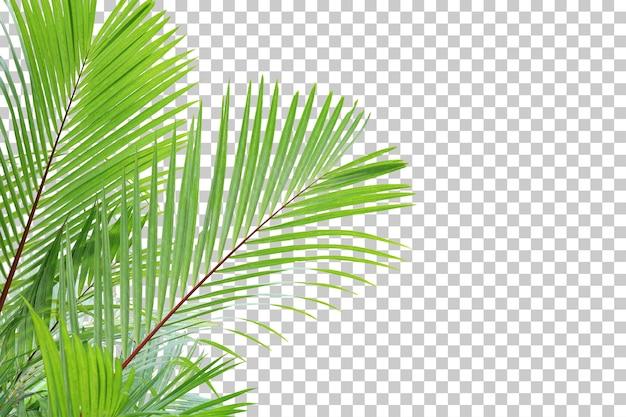 Realistische palme verlässt den vordergrund isoliert
