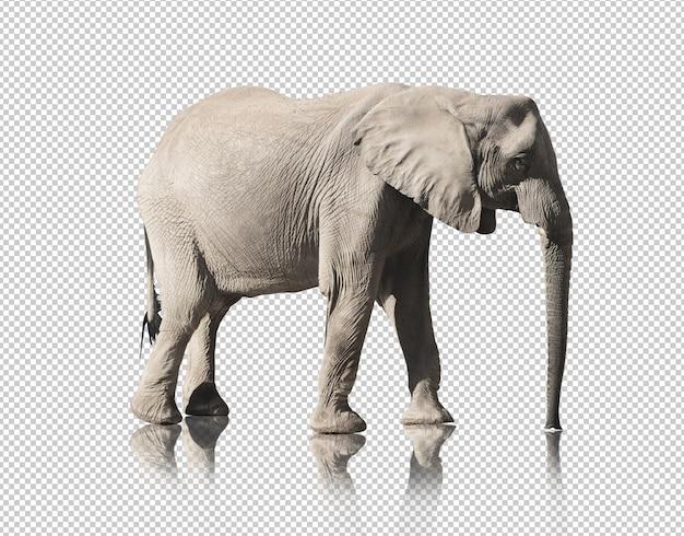 Realistischer elefant