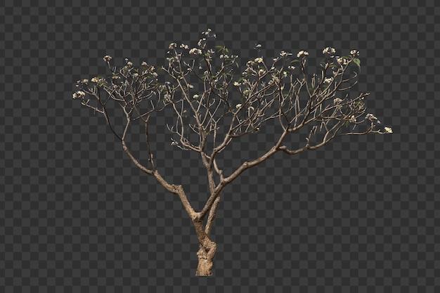 Realistischer frangipani-baum-vordergrund isoliert